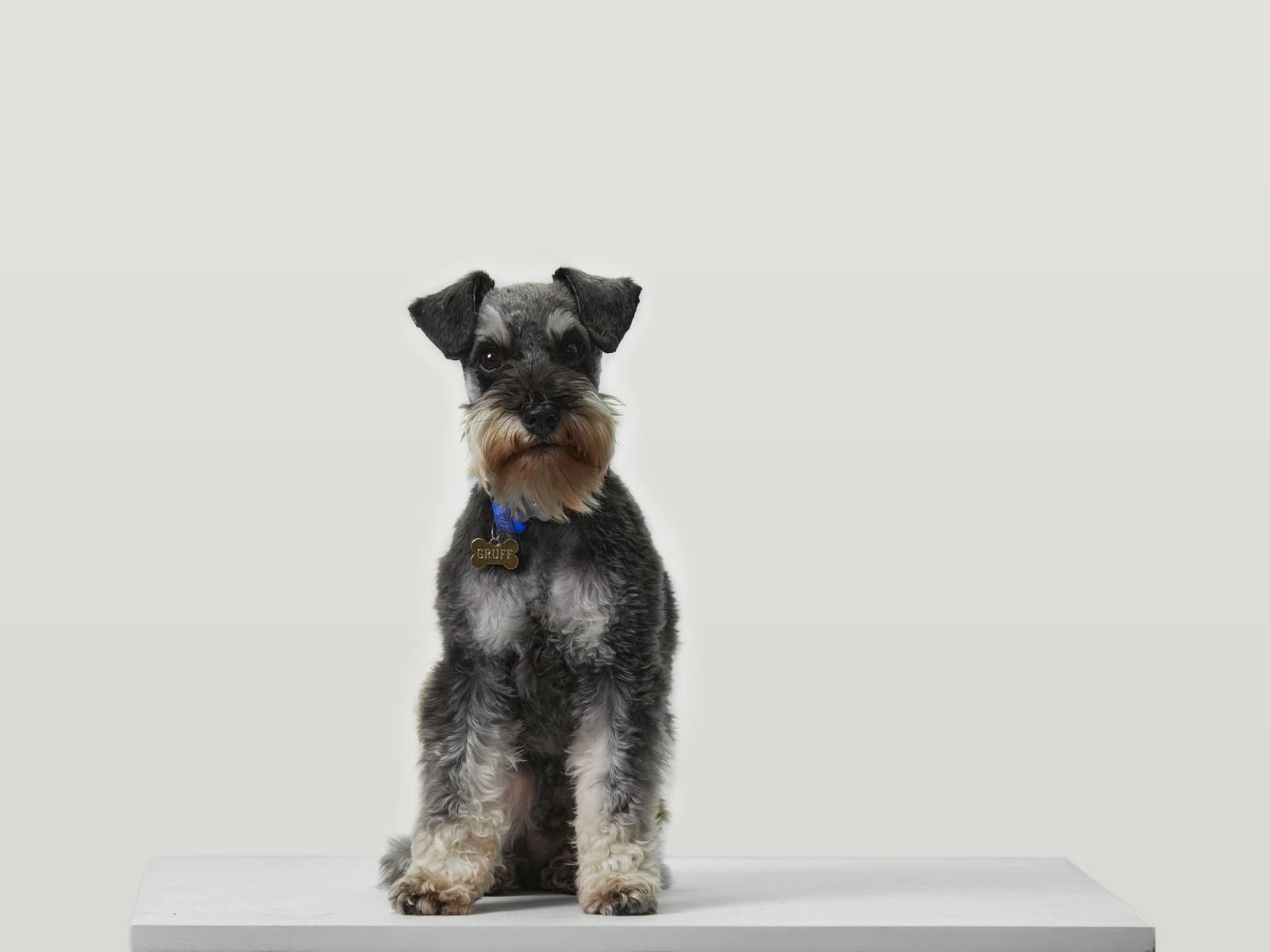 A profile image of Gruff